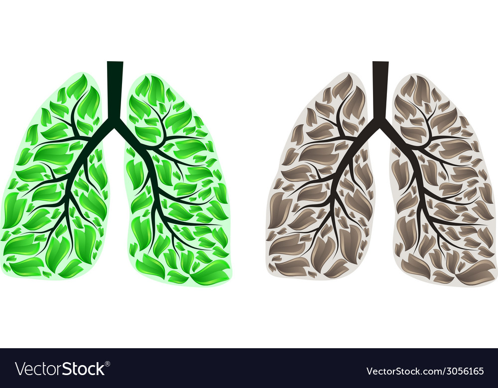Two lungs vector | Price: 1 Credit (USD $1)