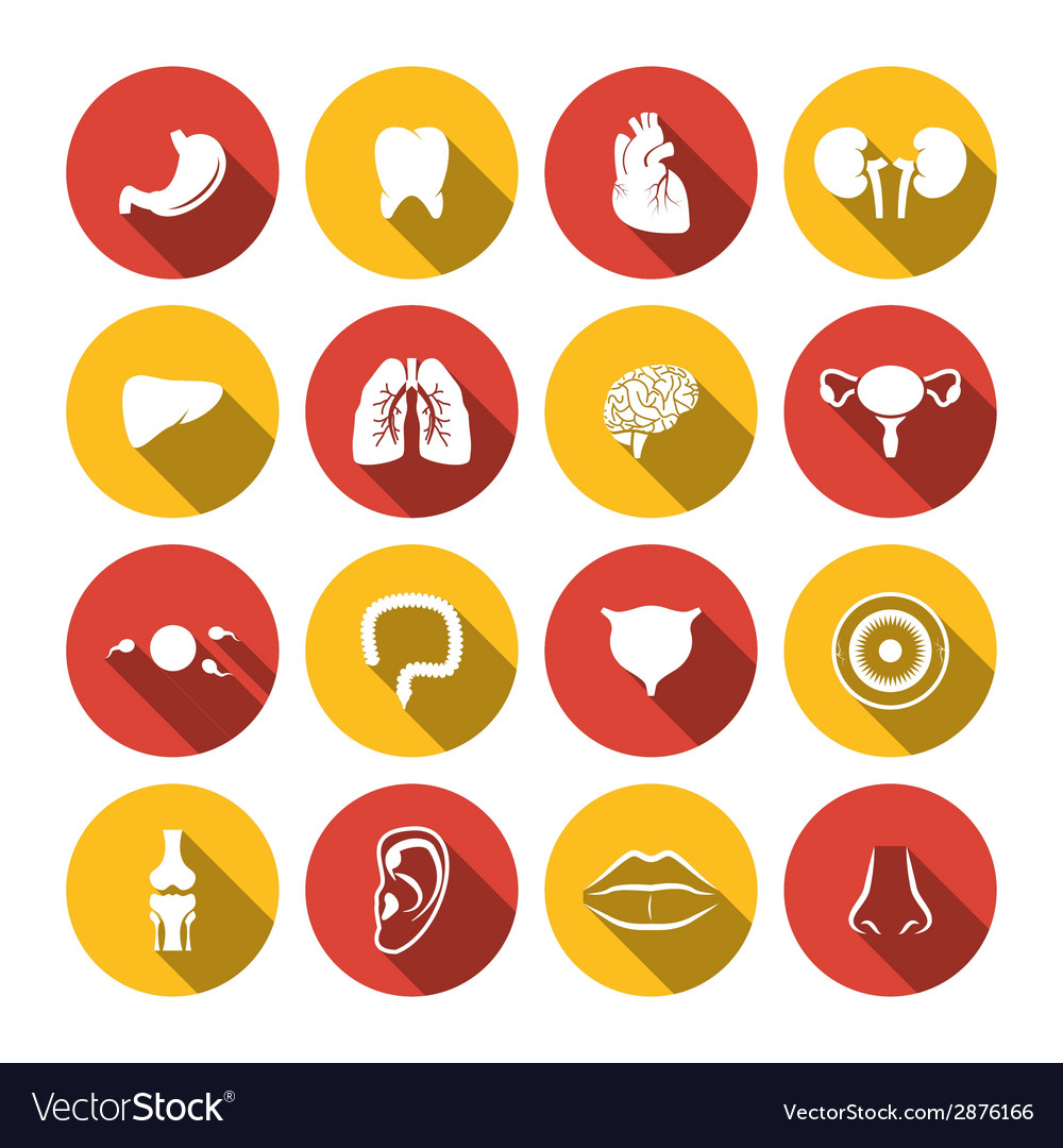 Human organs icons vector | Price: 1 Credit (USD $1)