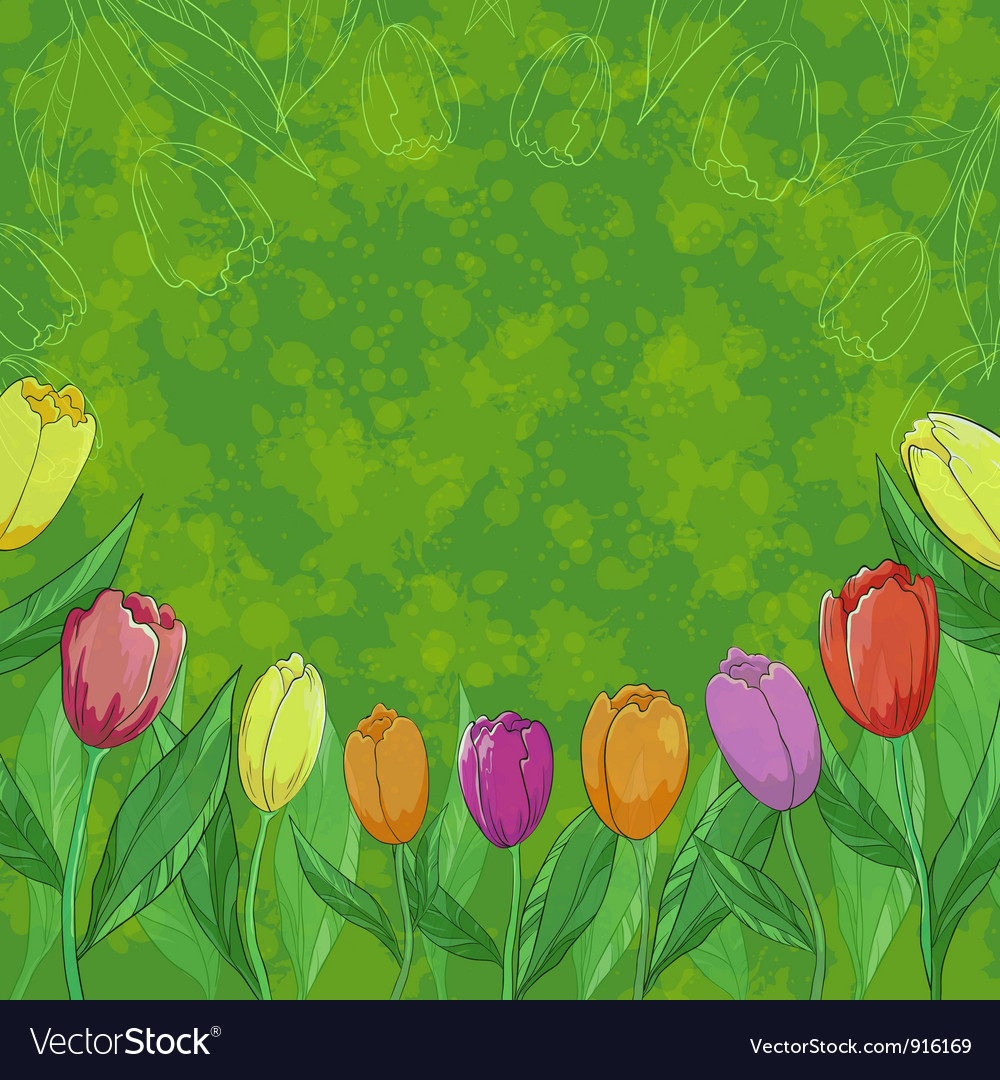 Flowers tulips on green background vector | Price: 1 Credit (USD $1)