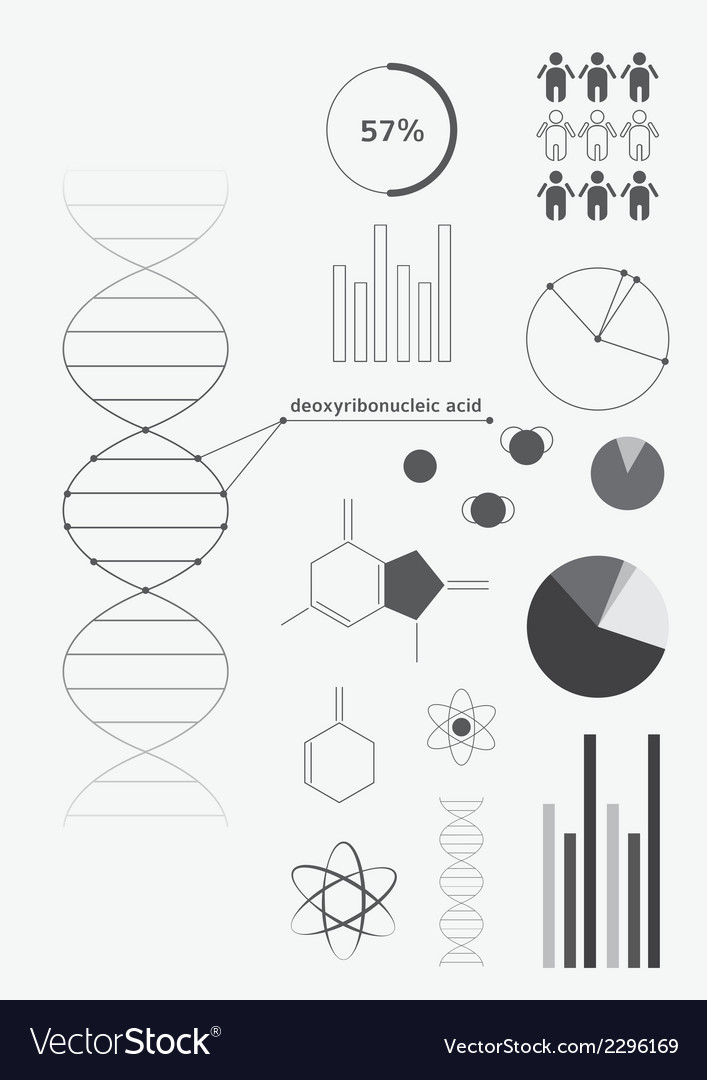 Infographics deoxyribonucleic acid dna vector | Price: 1 Credit (USD $1)