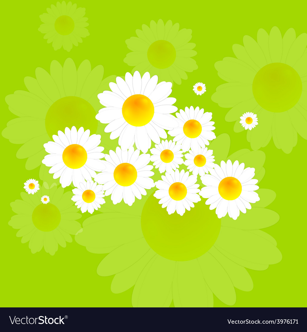 Bright summer background with camomile flowers vector | Price: 1 Credit (USD $1)