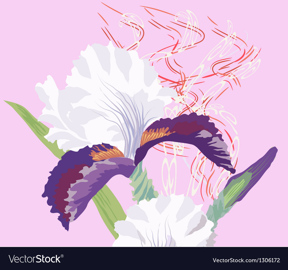 Iris on a pink background vector | Price: 1 Credit (USD $1)