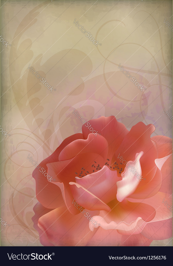 Rose vintage old paper textured background vector | Price: 1 Credit (USD $1)