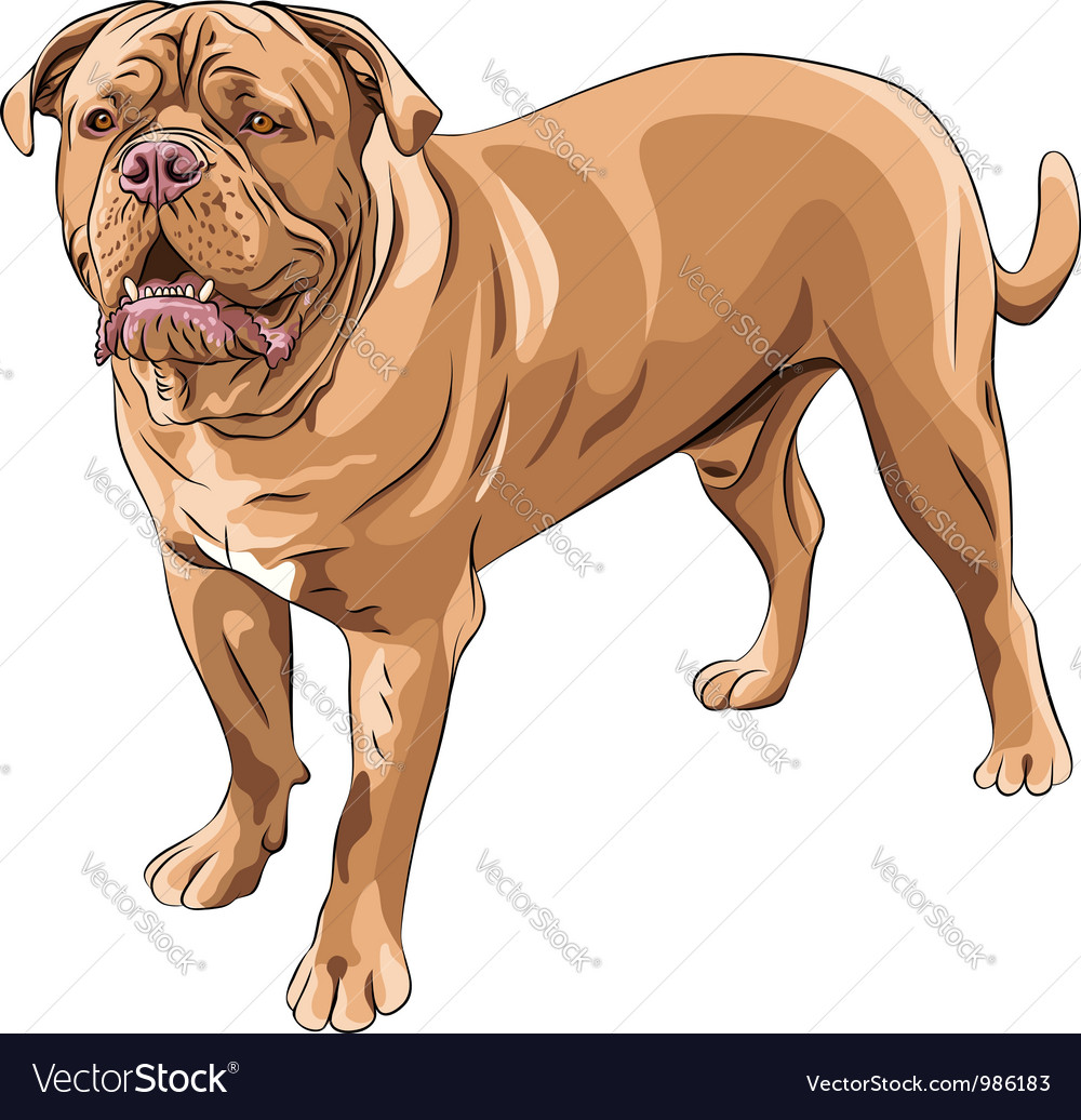 French mastiff vector | Price: 5 Credit (USD $5)