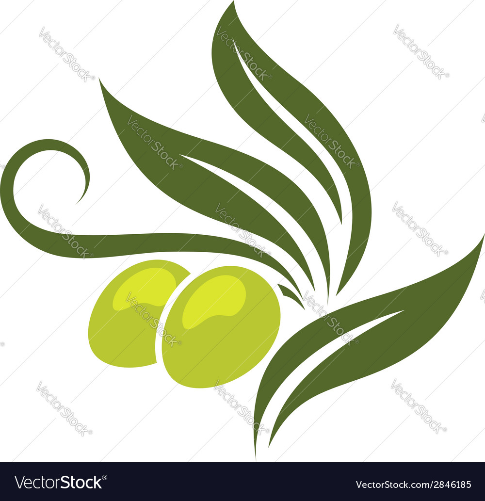 Green olives branch vector | Price: 1 Credit (USD $1)