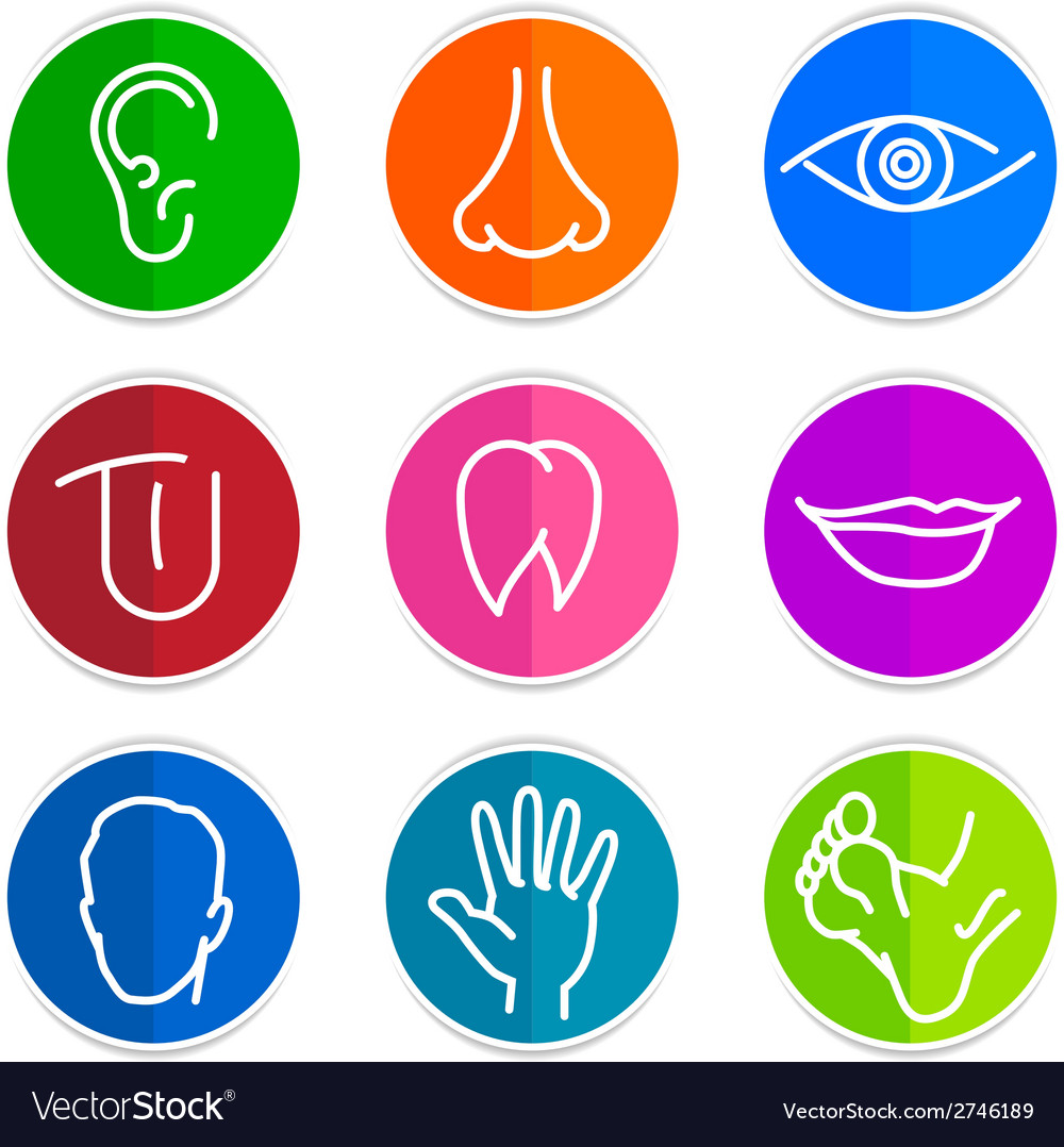 Set of icons human body parts vector | Price: 1 Credit (USD $1)
