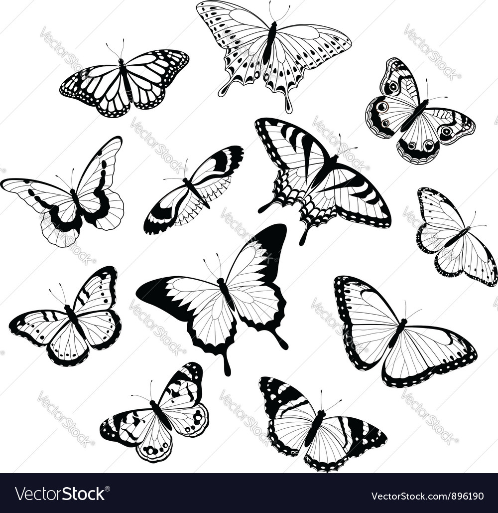 Black and white butterflies vector | Price: 1 Credit (USD $1)