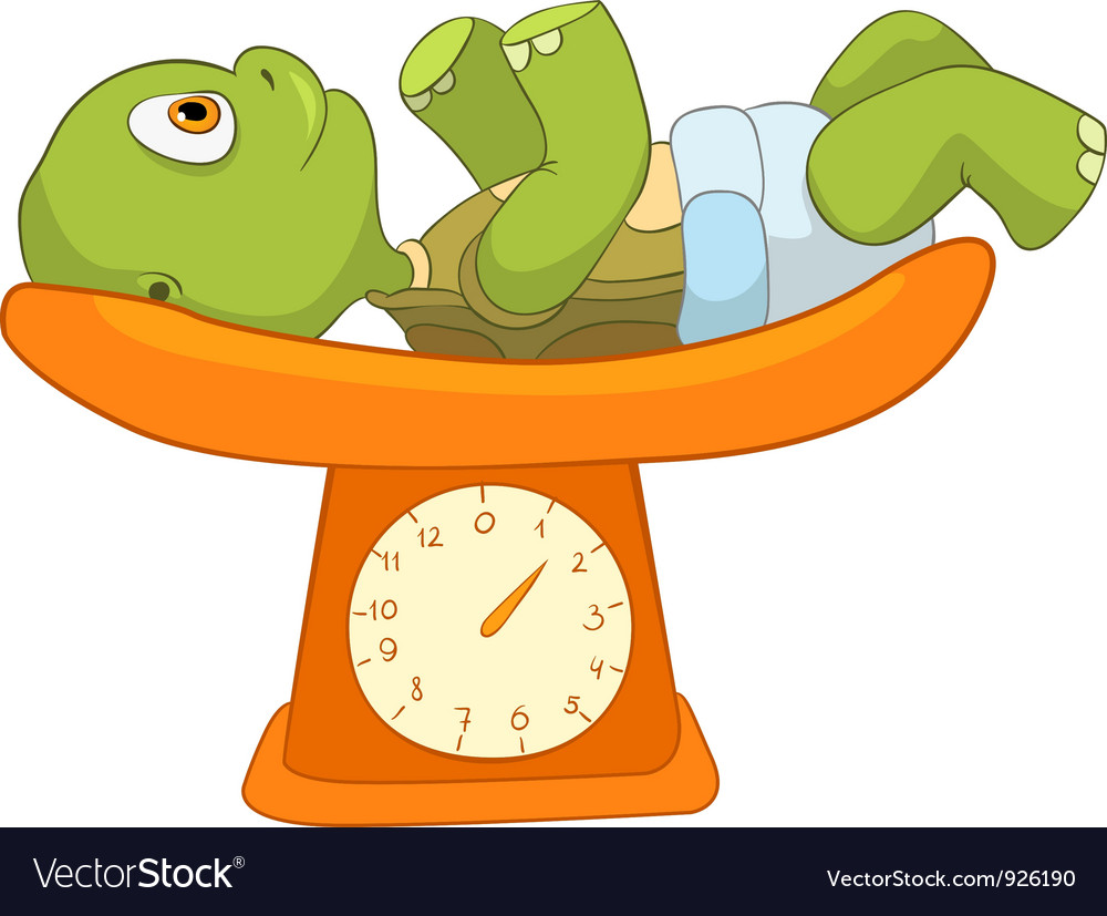 Funny turtle baby weighing vector | Price: 3 Credit (USD $3)