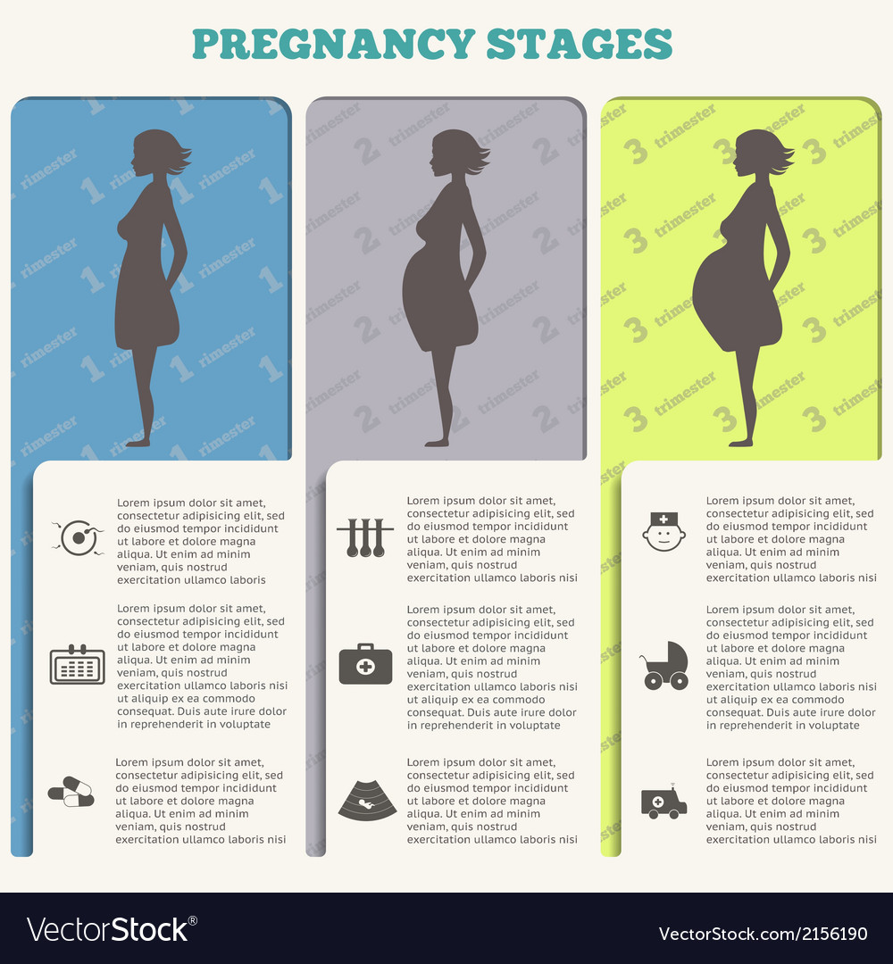 Pregnancy and birth infographics pregnancy stages vector | Price: 1 Credit (USD $1)