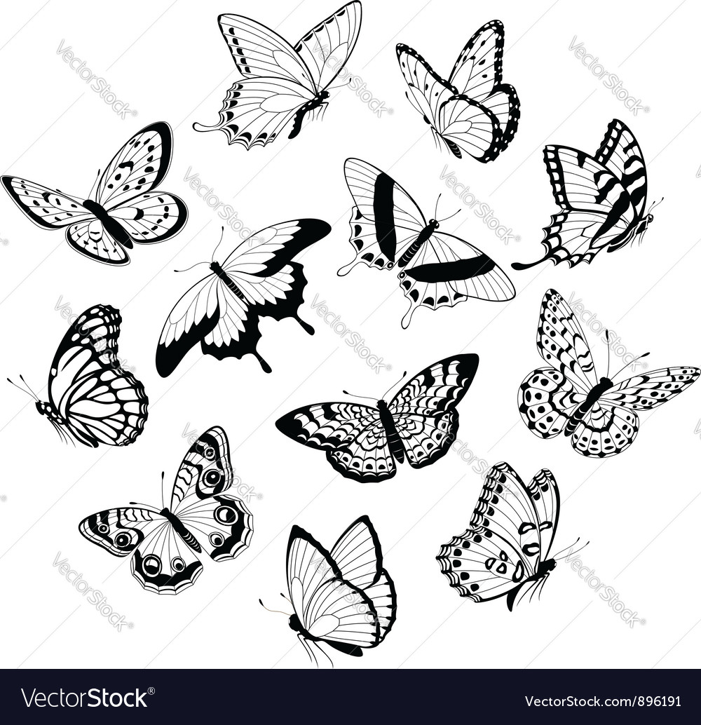 Flying black white butterflies vector | Price: 1 Credit (USD $1)