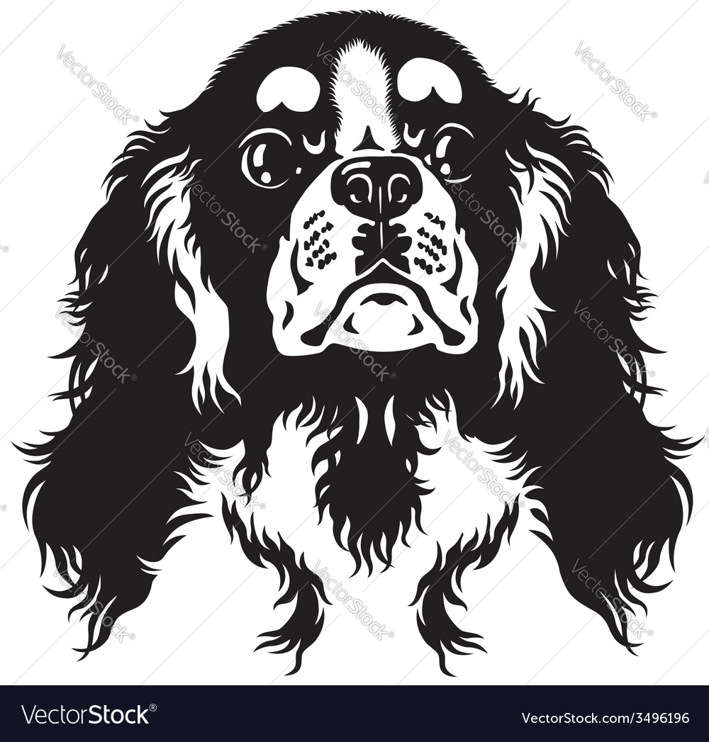 Cavalier king charles spaniel black white vector | Price: 1 Credit (USD $1)