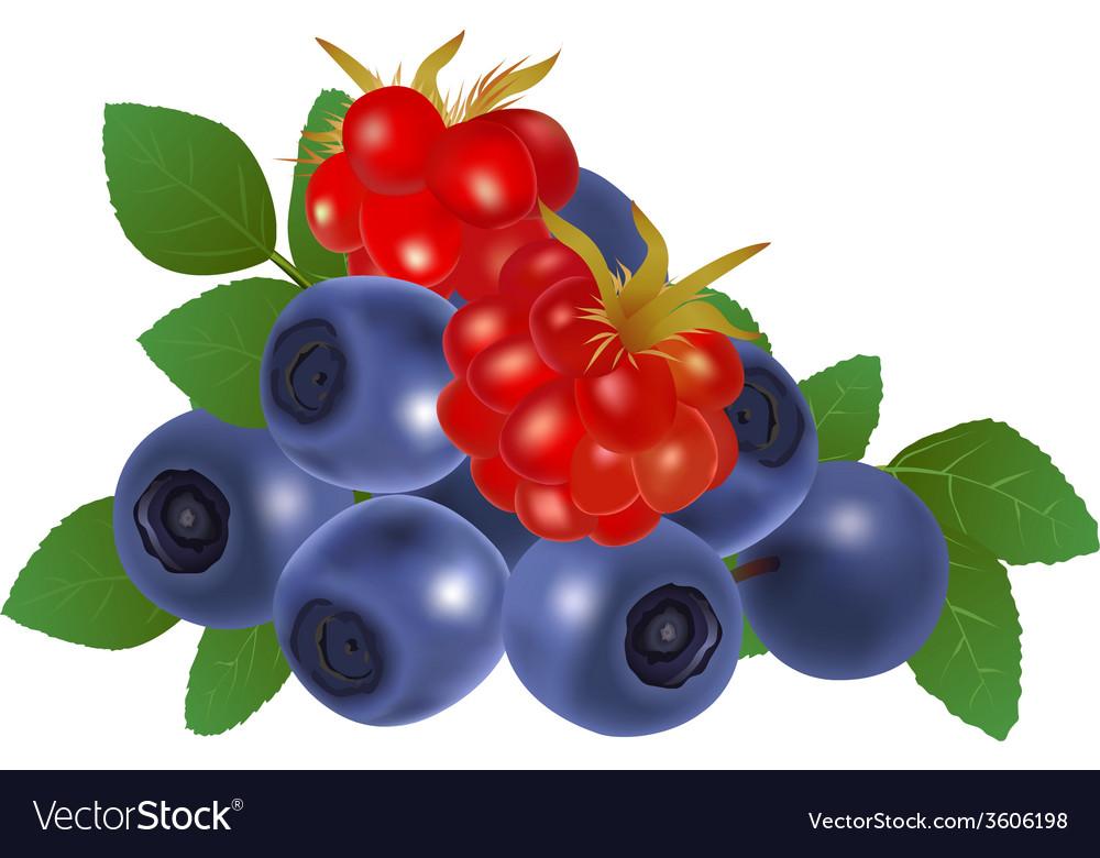 Blueberries and raspberries vector   Price: 1 Credit (USD $1)