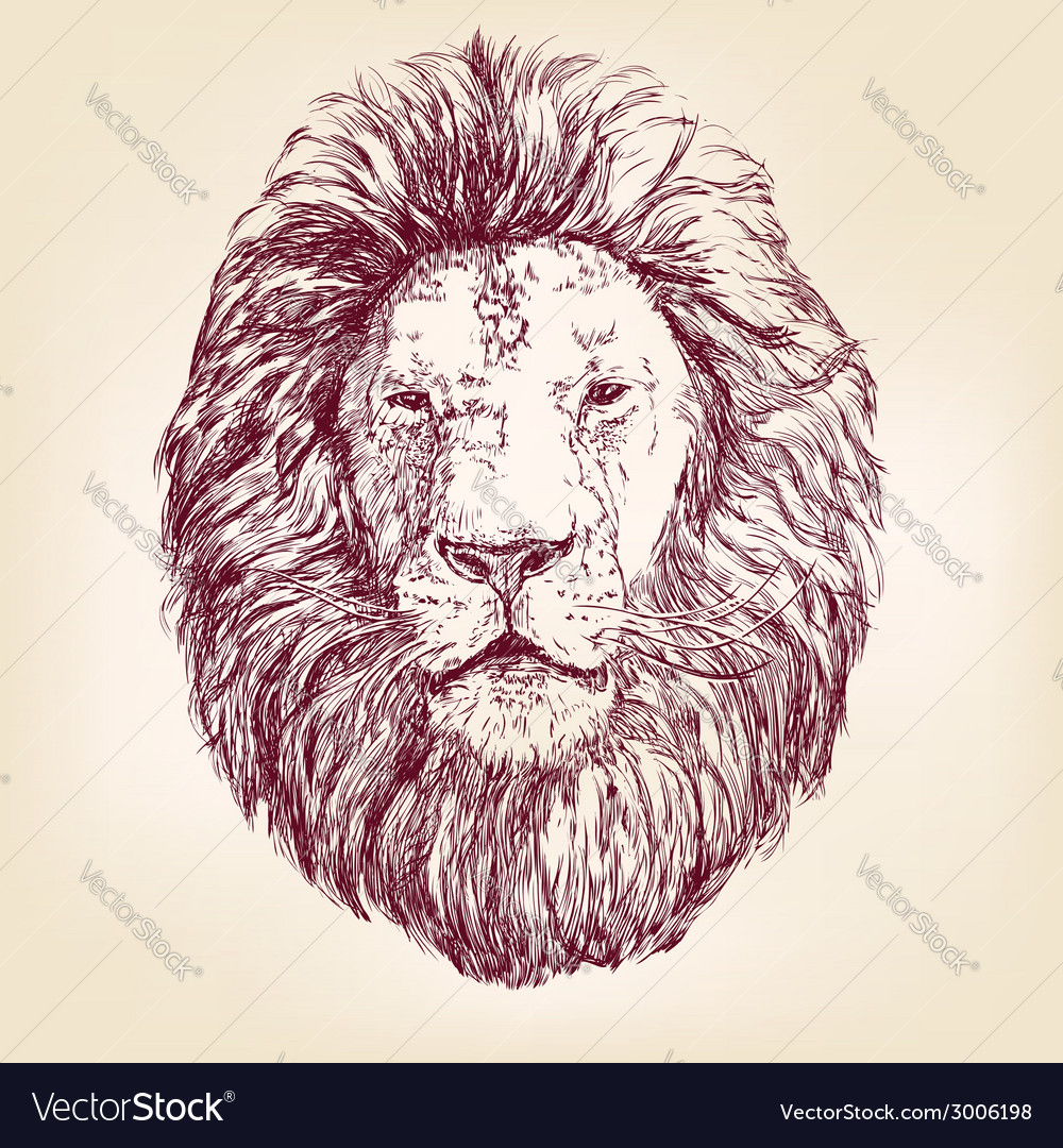 Lion hand drawn llustration realistic sketch vector | Price: 1 Credit (USD $1)