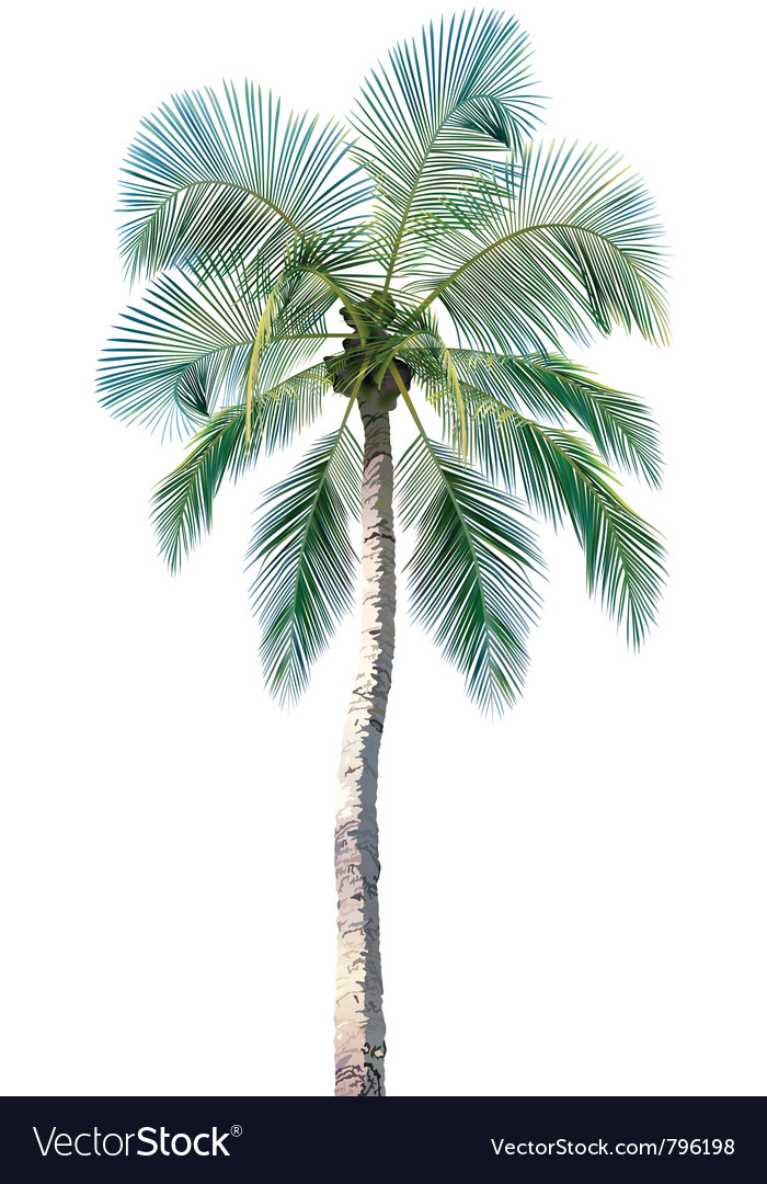 Palm tree vector | Price: 1 Credit (USD $1)