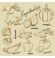 Hand drawn vegetables vector
