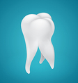 Human healthy tooth vector