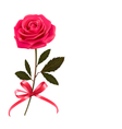 Background with rose and a bow vector