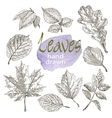 Collection of highly detailed hand drawn leaves vector