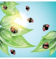 Red ladybugs on the green leaves vector