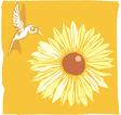 Hummingbird and flower vector