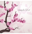Cherry flowers card with spring blossom vector