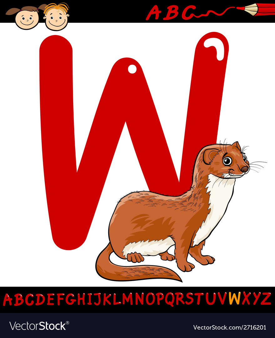 Letter w for weasel cartoon vector | Price: 1 Credit (USD $1)