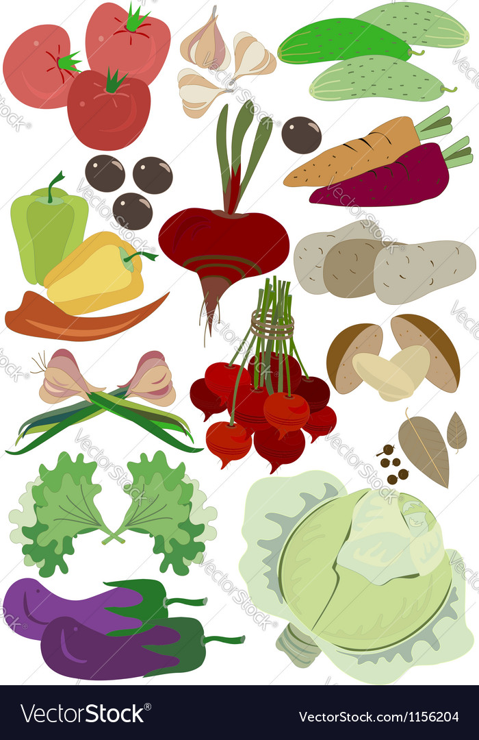 Autumn group vegetables for balanced diet vector | Price: 1 Credit (USD $1)
