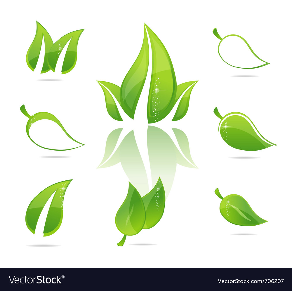 Green eco leaves vector | Price: 1 Credit (USD $1)