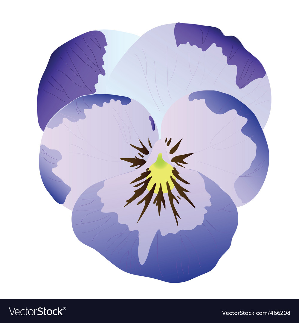 Blue pansy vector | Price: 1 Credit (USD $1)