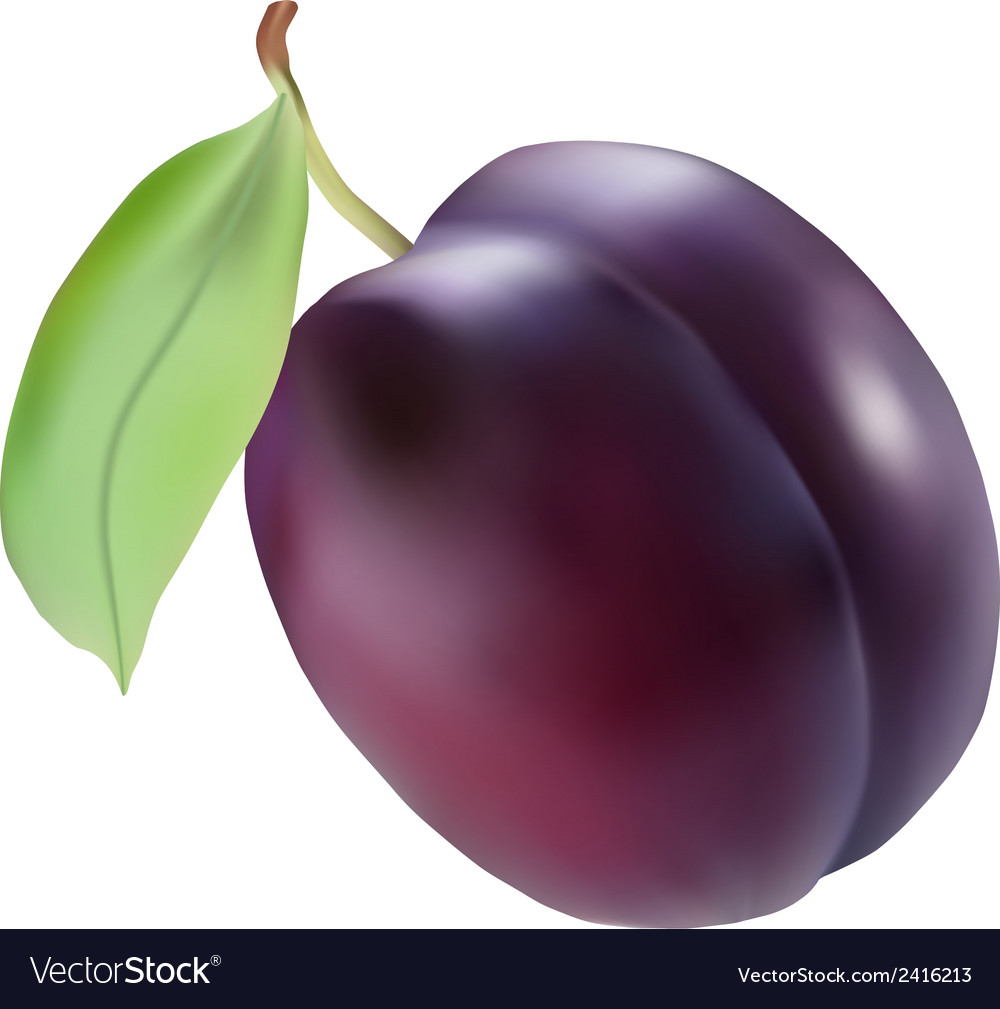 Plum vector | Price: 1 Credit (USD $1)