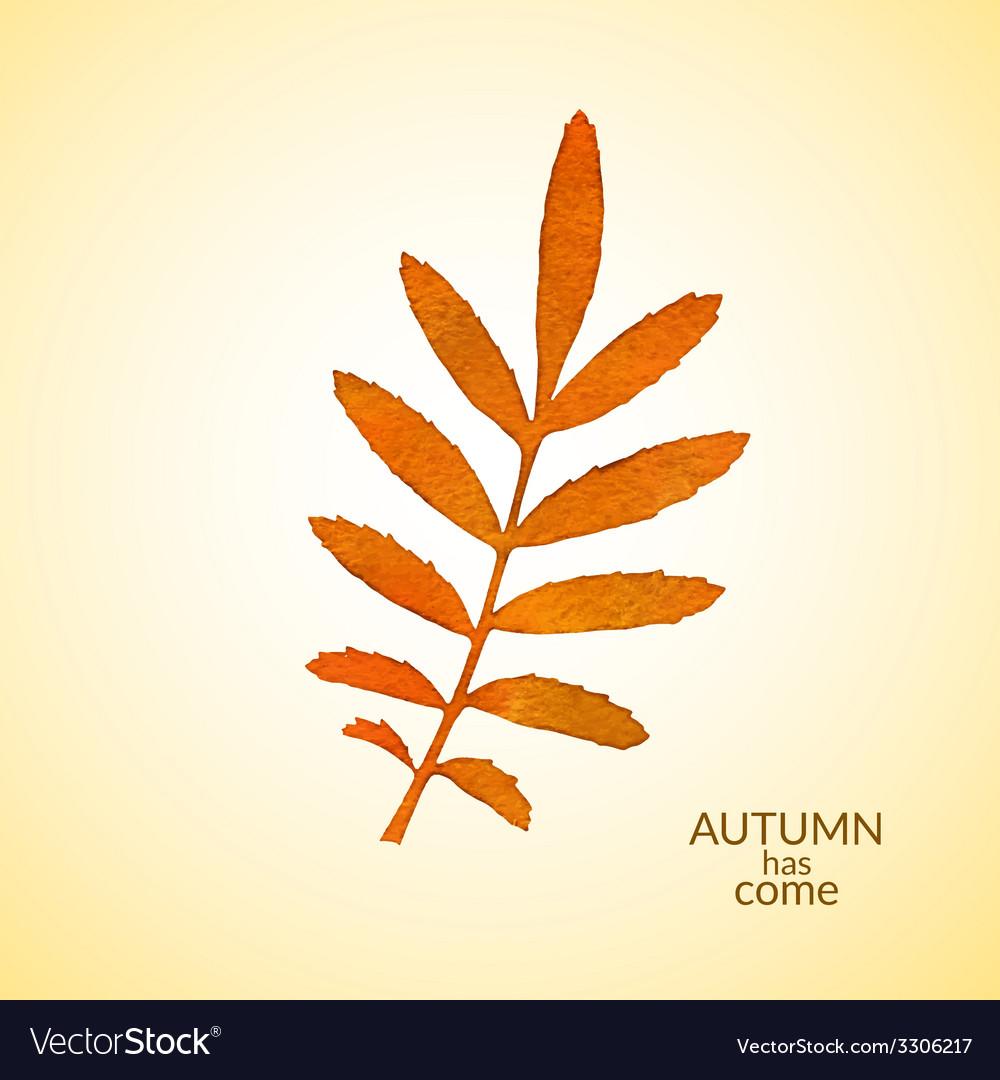 Autumn watercolor rowan leaf vector   Price: 1 Credit (USD $1)