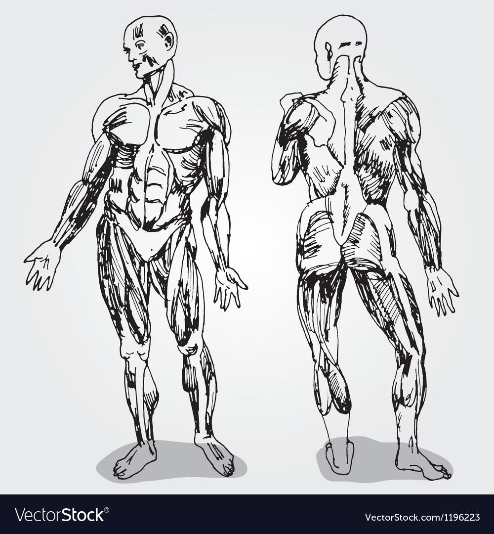 Body vector   Price: 1 Credit (USD $1)