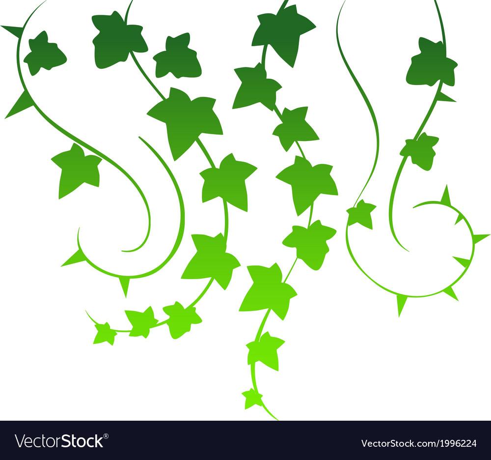 Green ivy vector | Price: 1 Credit (USD $1)