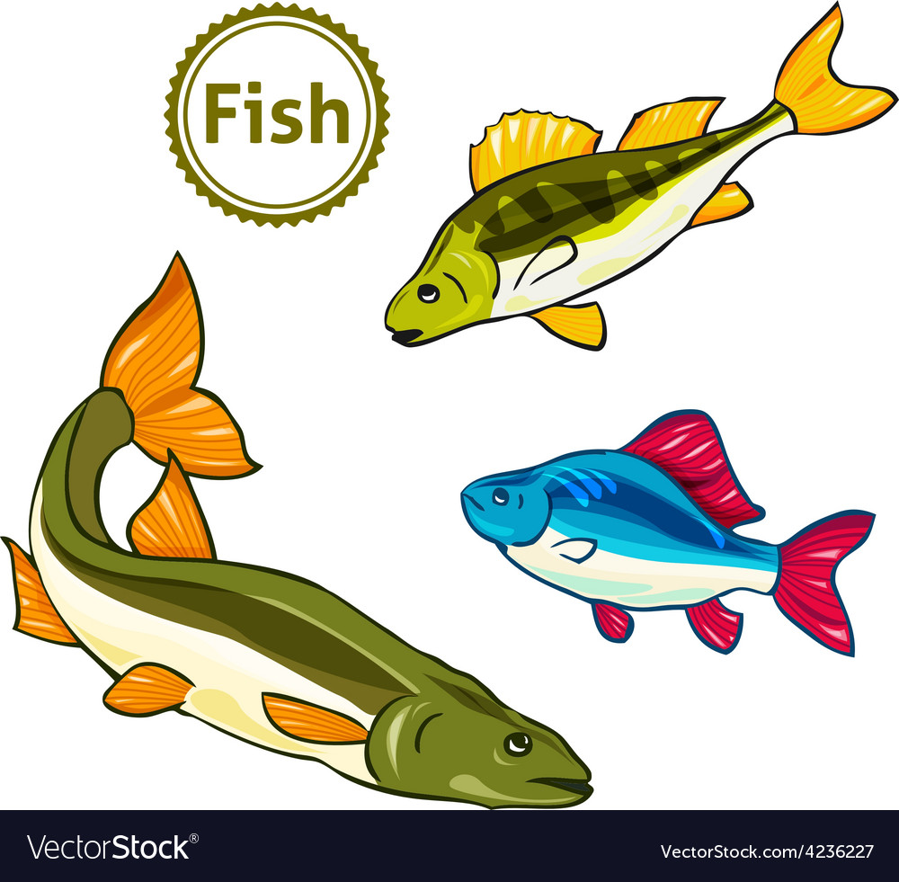 Fishes perch salmon vector | Price: 1 Credit (USD $1)