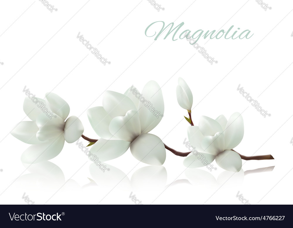 Flower background with blossom branch of white vector | Price: 1 Credit (USD $1)