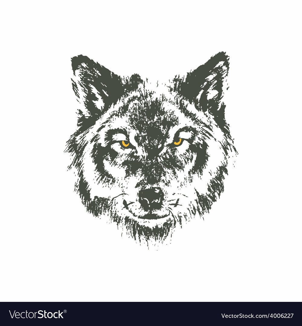 Hand drawn wolf sketch on white background vector | Price: 1 Credit (USD $1)