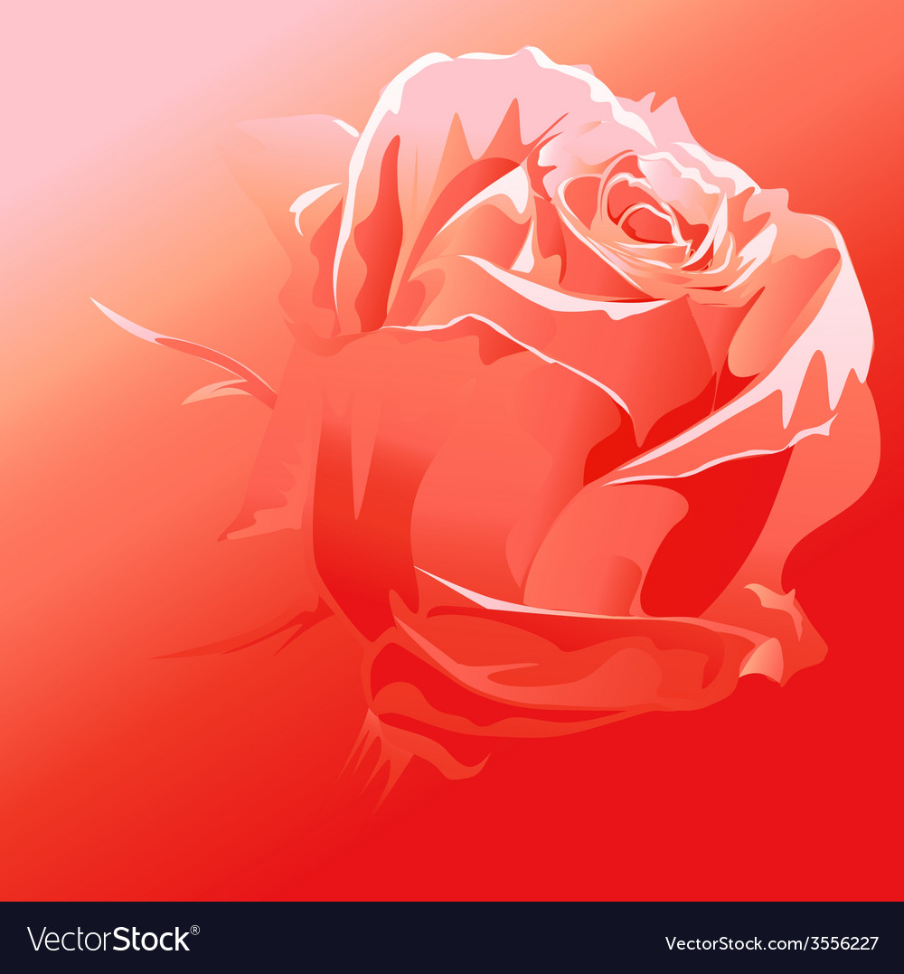 Red rose - abstract background vector | Price: 1 Credit (USD $1)