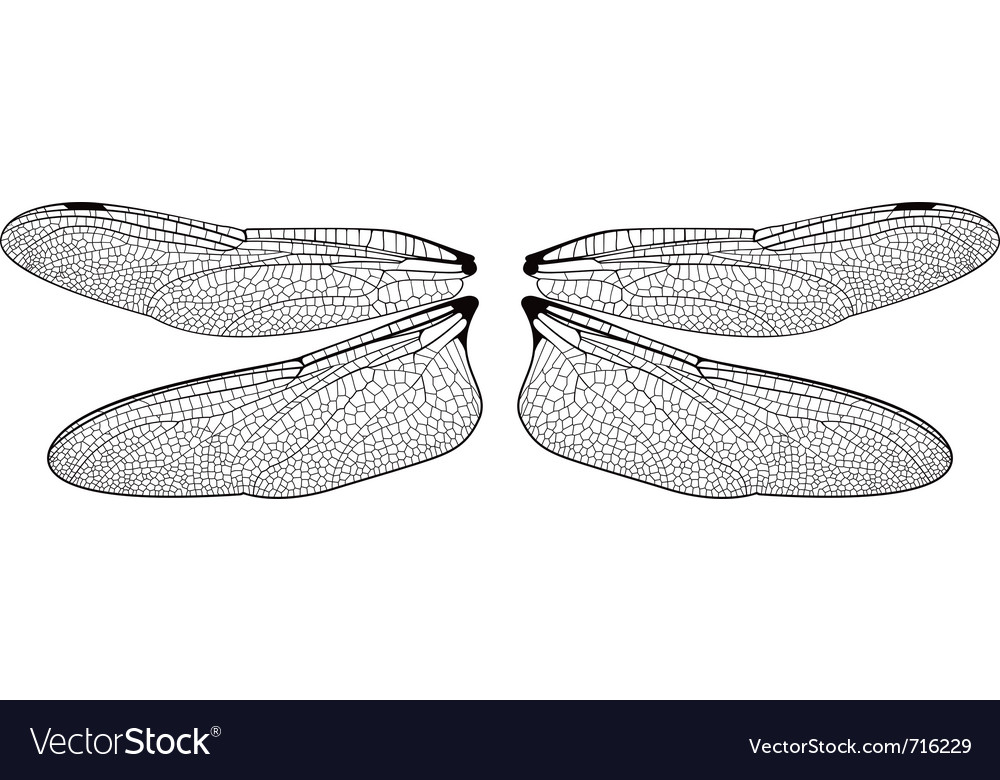 Dragonfly wings vector | Price: 1 Credit (USD $1)