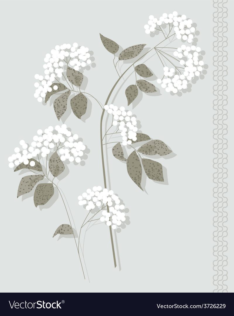 White botanical vector   Price: 1 Credit (USD $1)