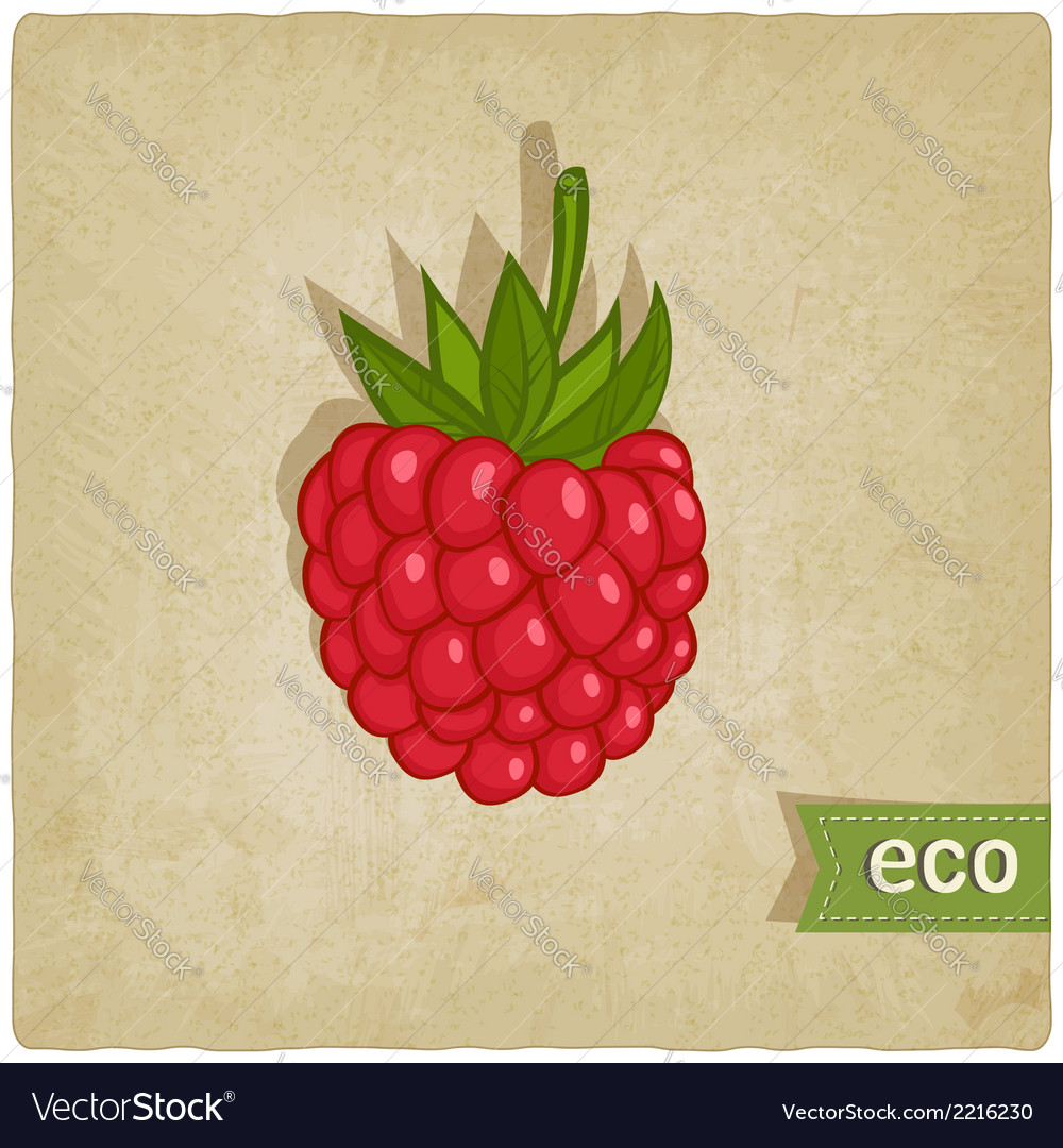Raspberries eco background vector | Price: 1 Credit (USD $1)