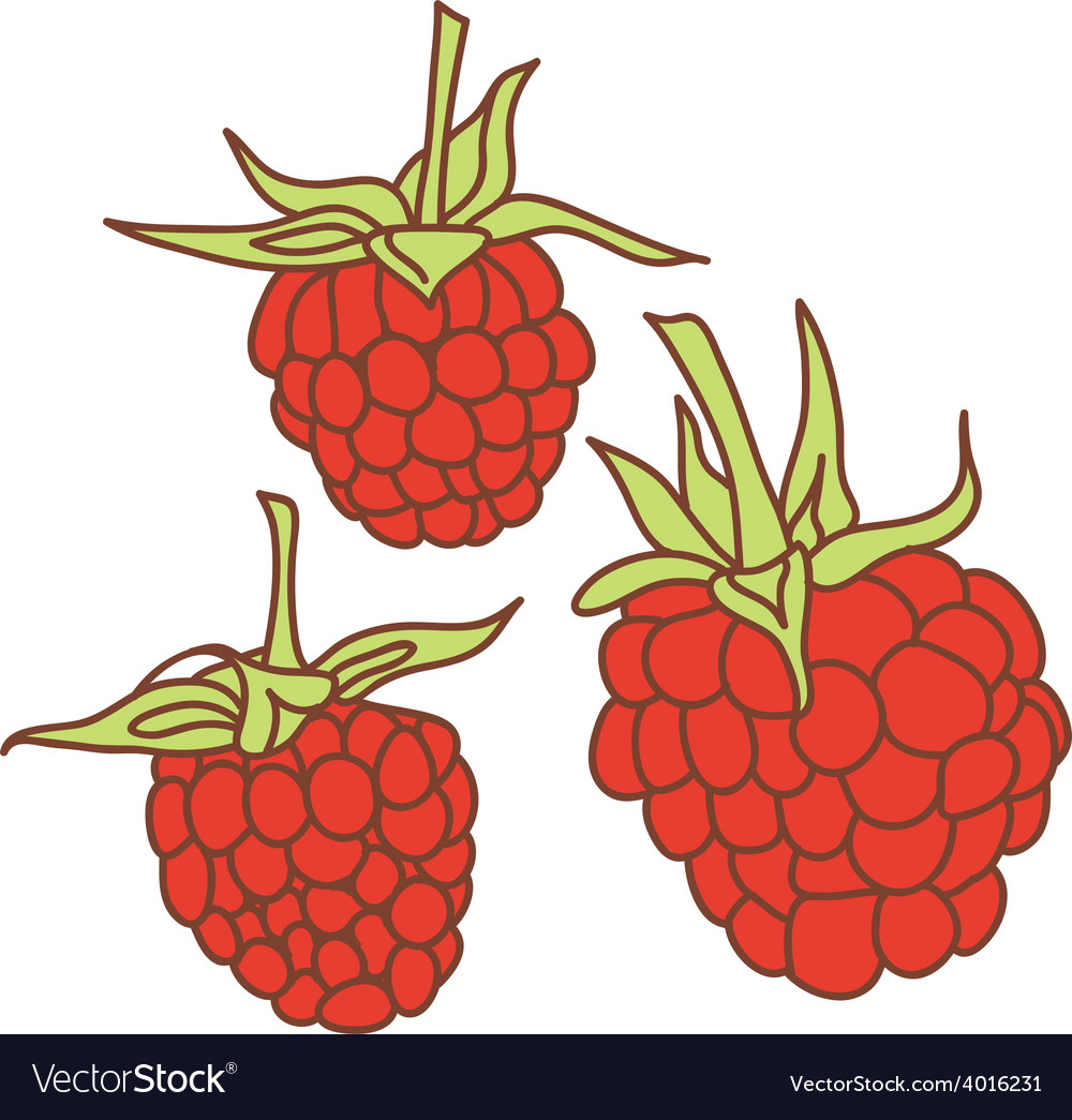 Ripe raspberry isolated on white background sketch vector | Price: 1 Credit (USD $1)