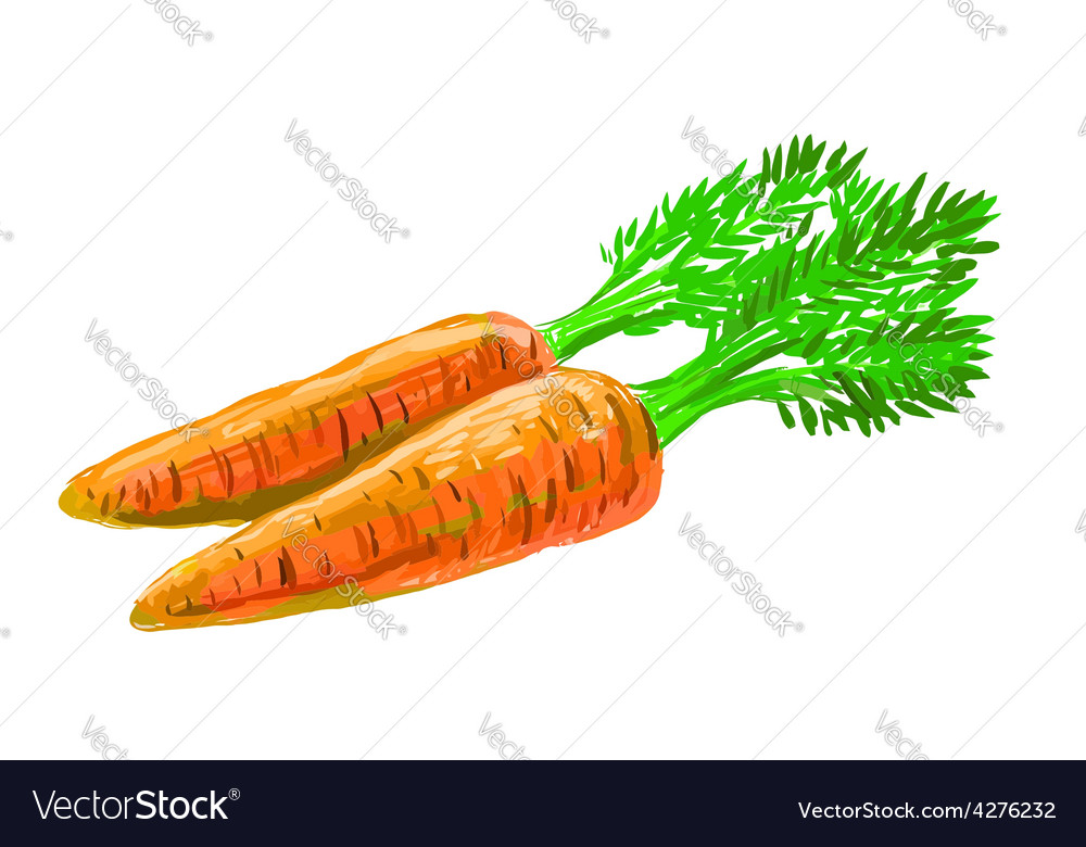 Picture of carrot vector   Price: 1 Credit (USD $1)