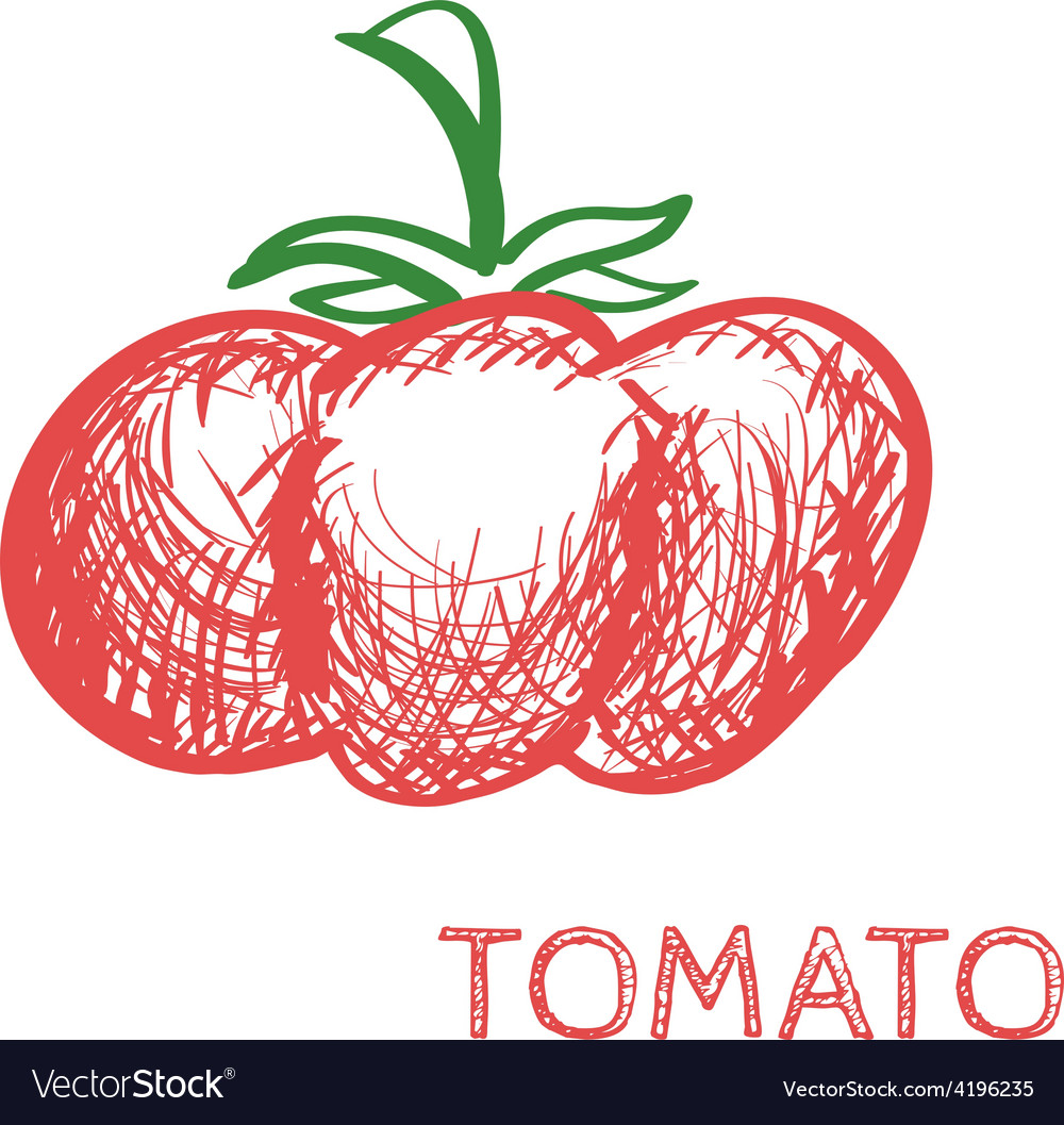 Hand drawn tomato sketch vector | Price: 1 Credit (USD $1)