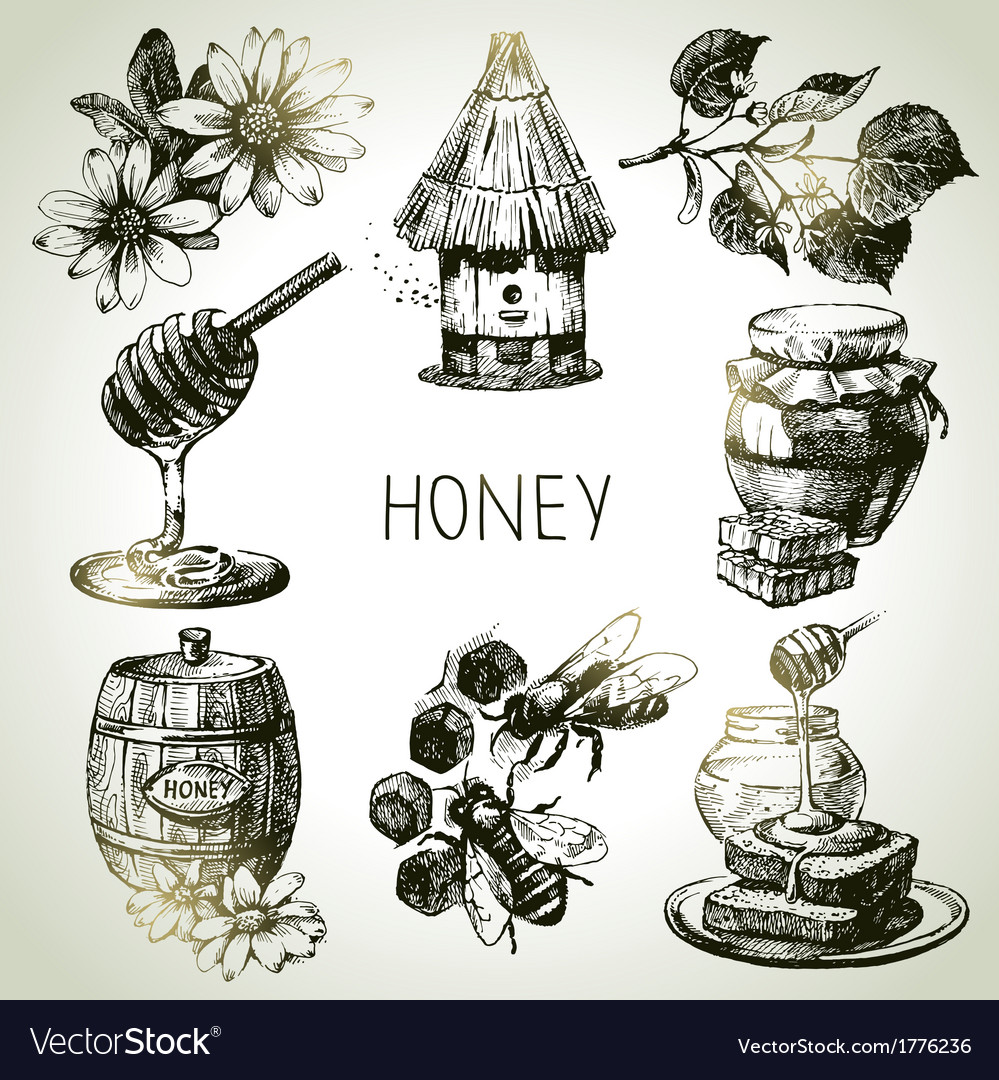 Hand drawn vintage honey set vector | Price: 1 Credit (USD $1)