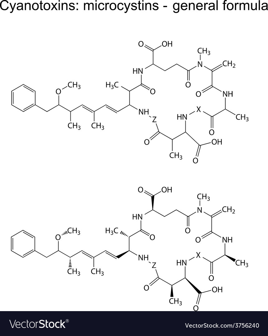 Microcystins - general chemical structural formula vector | Price: 1 Credit (USD $1)