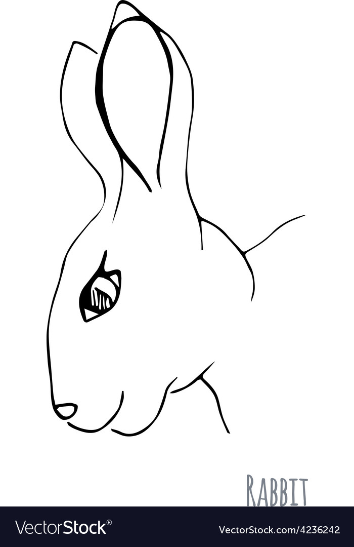 Sketch of a rabbit vector | Price: 1 Credit (USD $1)