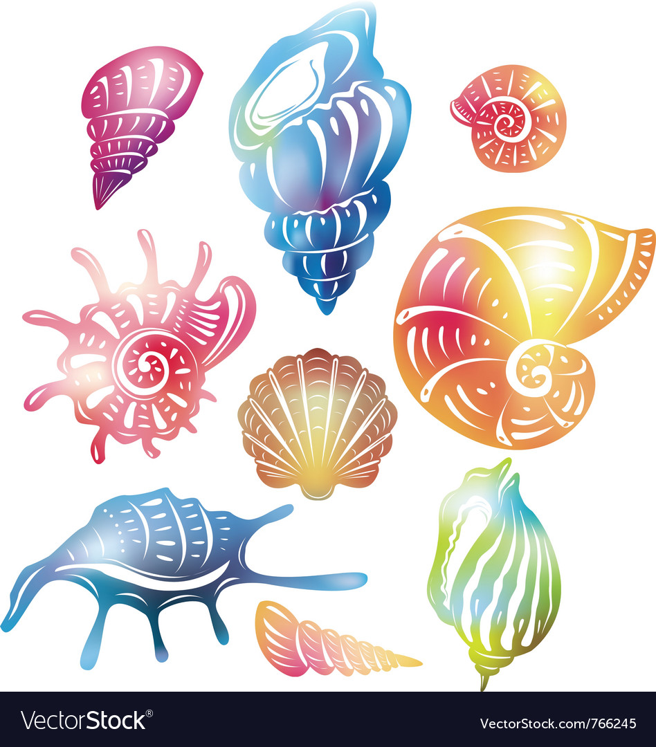 Colored seashell vector | Price: 1 Credit (USD $1)