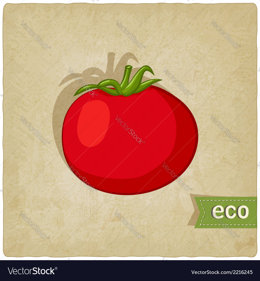 Tomato eco background vector | Price: 1 Credit (USD $1)
