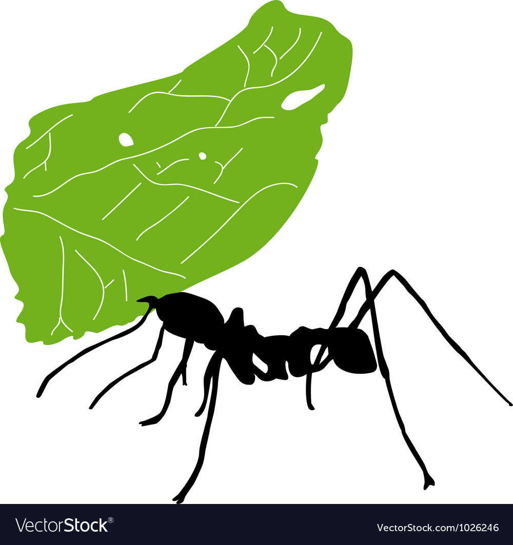 Leaf cutter ant vector | Price: 1 Credit (USD $1)