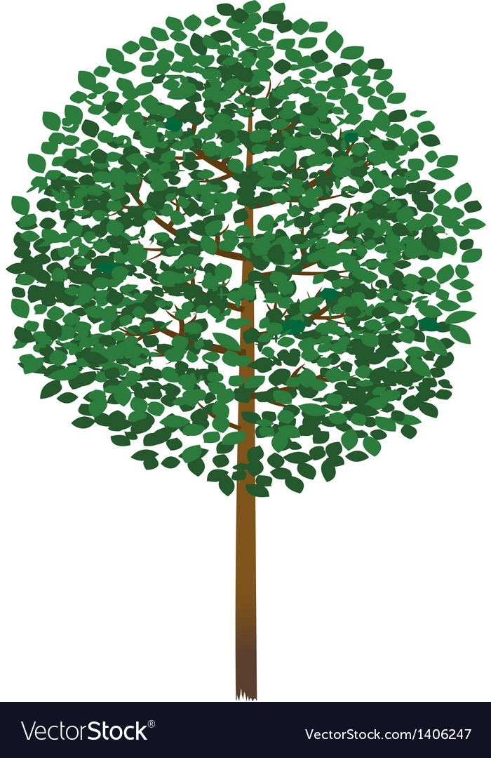 A view of tree vector
